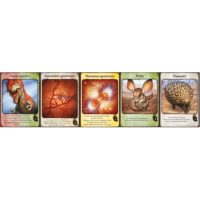 Evolution - Extension Cartes